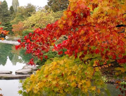 Successful Fall Planting